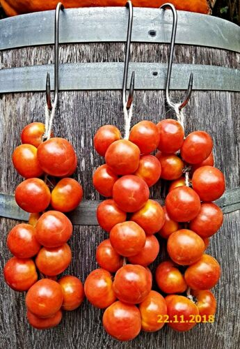 Long Lasting Old Variety From Mallorca Ramallet Tomato Seeds For Pa Amb Oli
