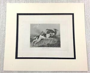 1843 Antico Stampa Deer Caccia Blood Hound Beagle Cane Cani Incisione