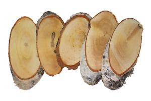 Birkenscheiben Oval Holzscheiben Baumscheiben Astscheiben Hochzeit Birkenscheibe