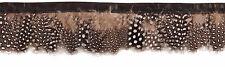 Echte Perlhuhn Borte, Mix schwarz grau-braun  weiß Breite ca. 3 cm - Länge 50 cm