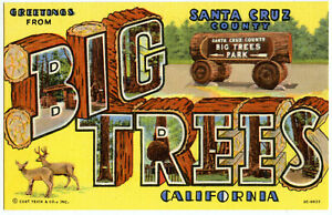 Greetings-From-BIG-TREES-California-Santa-Cruz-Linen-Postcard-Big-Letter-Litho