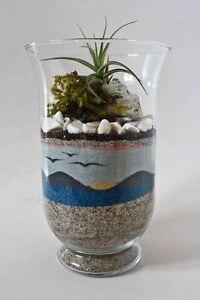 Tillandsia sable coloré pour aquarium plante air décoration ...