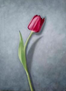 NEW-ANDREW-K-SHORT-ORIGINAL-Red-Tulip-II-red-Flower-FLORAL-OIL-CANVAS-PAINTING