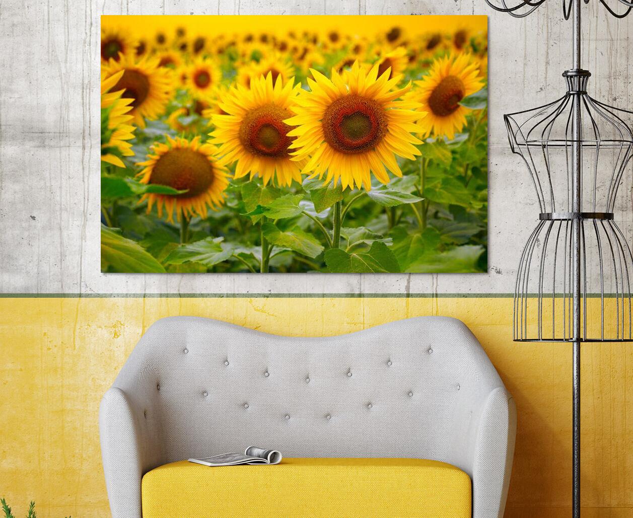 3D Goldene SonnenBlaume 8733 Fototapeten Wandbild BildTapete AJSTORE DE Lemon