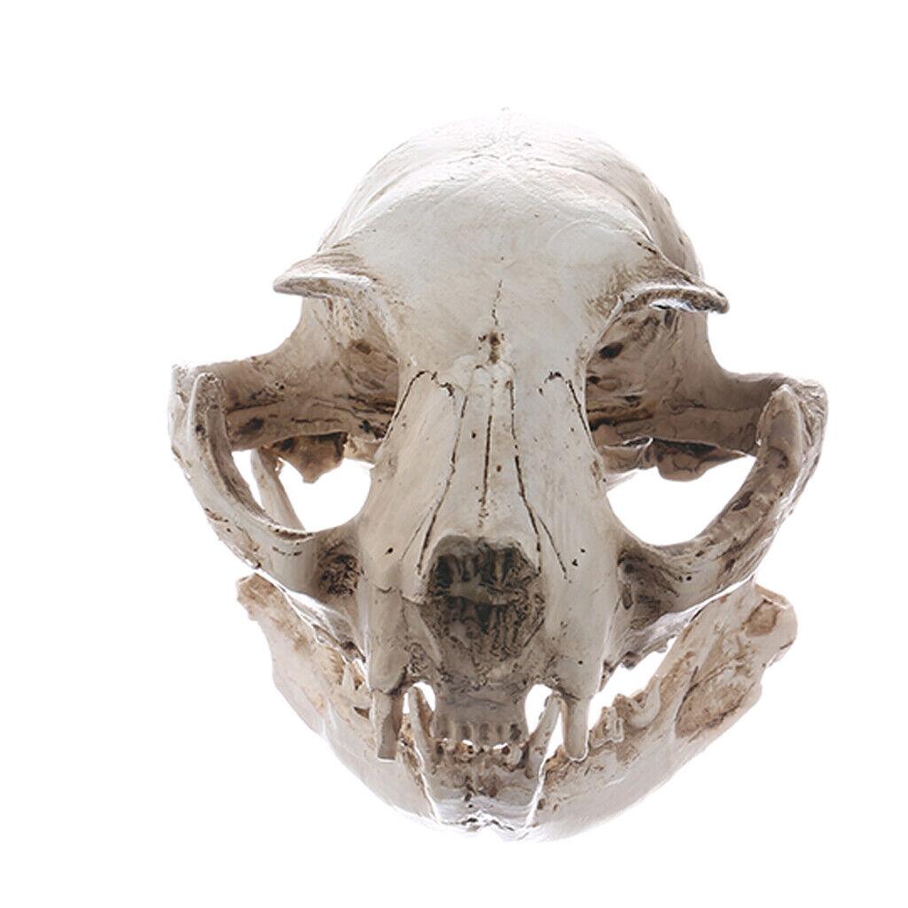 Realistic Cat Skull Resin Model Replica Decorative Unique Gifts Halloween DecoAB