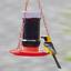 Perky-Pet-253-Oriole-Jelly-Wild-Bird-Feeder thumbnail 8