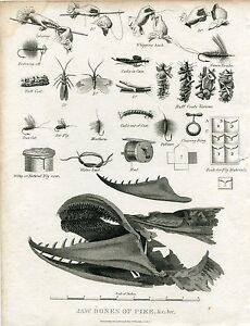 Engraved-Antique-Several-Animals-And-Jaws-of-The-Pike