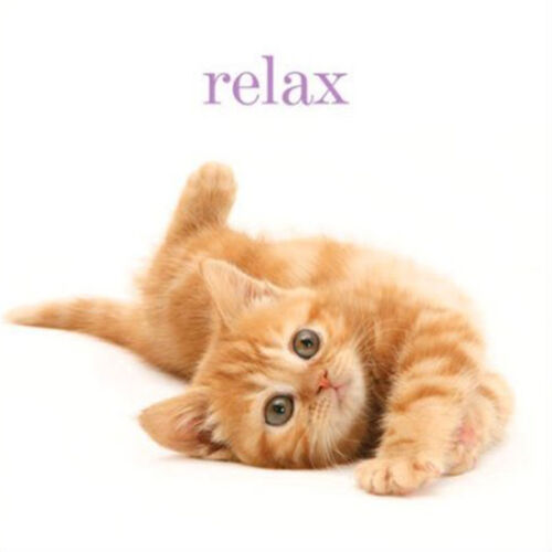 Ginger Kitten Birthday Card Relax Its Your Birthday Pretty Cat