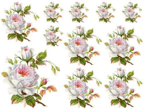 Vintage Image Shabby Victorian White Rose Waterslide Decals FL332