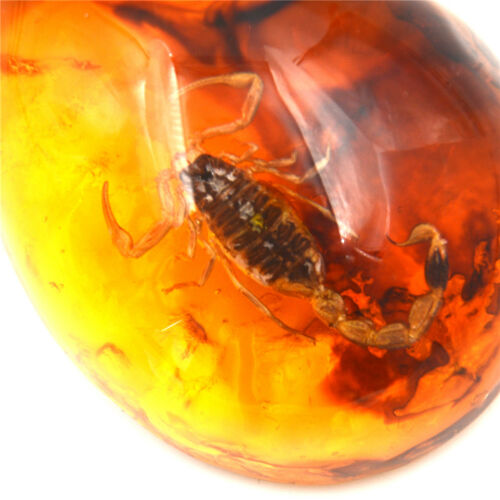 1Pc Fashion Insect Stone Scorpions Inclusion Amber Baltic Pendant Necklace Py