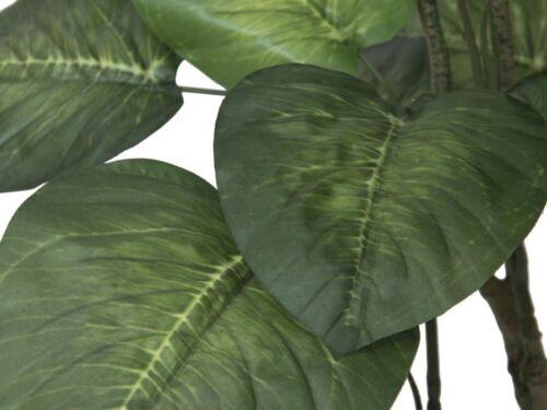 EUROPALMS Pothosbaum 175cm