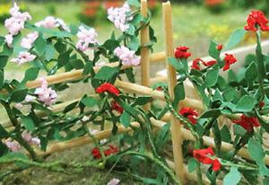 Tasma-Voie-Ferroviaire-Scene-Floraison-Plantes-Escalade-Roses-Paquet-de-6