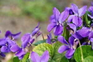 Schöne Blumen Ein Farbenmeer Im Garten Die Wohlriechenden