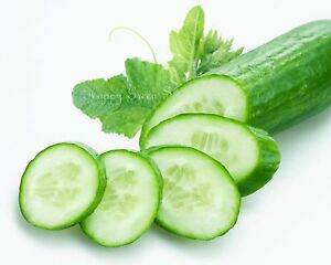 Vegetable CUCUMBER F1 - KING OF SALAD  100 SEEDS greenhouse/outdoor NO SKINNING