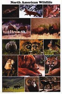 SCHOLASTIC-POSTER-North-American-Wildlife-Collage-Magazine-24x36-Images-Print