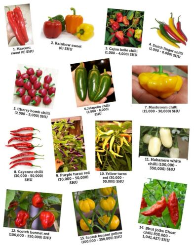 14 varieties Mixed 2 seeds of each variety 28 seeds per pack. Chilli seeds