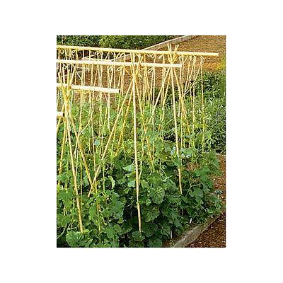 Lot of 10 / 25 Bamboo Stakes 3 / 4 / 6 / 8 ft lengths Vegetable Tomato Pepper +