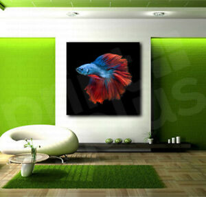 Details about Betta Fish Blue Red Canvas Art Poster Print Home Wall Decor