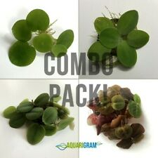 Floating Plant Combo Pack! (Frogbit, Red Root Floaters, Water Lettuce, Salvinia)