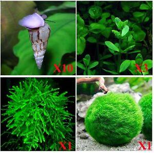 10-Malaysian-Trumpet-Snails-AND-Three-Types-of-Live-Aquarium-Plants-Java-Moss