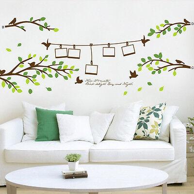 Huge Removable Photo Frame Tree Birds Words Art Mural Wall Vinyl Sticker Decal