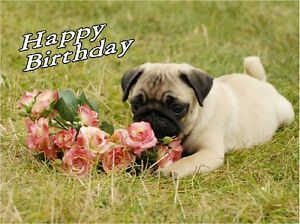 Image Is Loading Pug Dog Design A6 Textured Birthday Card BDPUG
