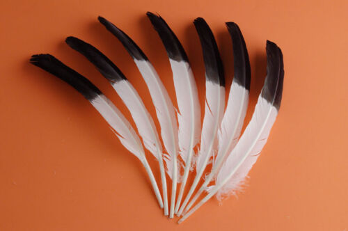 """25 TURKEY QUILLS 10-12/"""" Craft Feathers WHITE//BLACK TIPS ; Indian//Dress//Costume"""