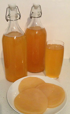 Kombucha Scoby - Fresh, Strong, Organic, Starter Tea, Clear Instructions + Help