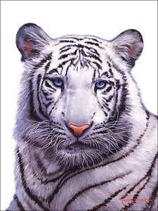 Ceramic-Accent-amp-Decor-Tile-White-Siberian-Tiger-Animal-Wildlife-Art-JWA021AT