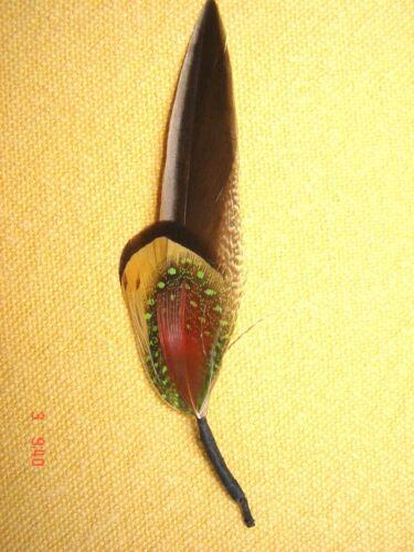 kleine Hutfeder Hutschmuck bunte Feder ca 8cm für Herrenhut Wanderhut Art 24-14