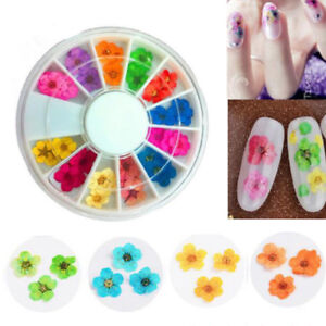 12-Colors-Real-Dry-Dried-Flowers-for-3D-UV-Gel-Acrylic-Nail-Art-Tips-DIY-Decor