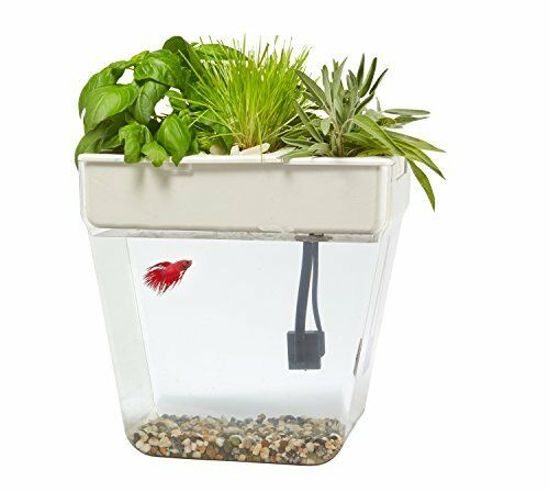 NEW Back to the Roots Water Garden Fish Tank Premium FREE SHIPPING