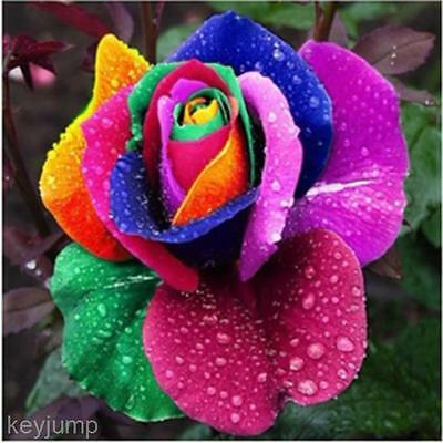 Multi-color 200Pcs Rainbow Rose Flower Seeds Garden Plants Seeds Flower Seeds