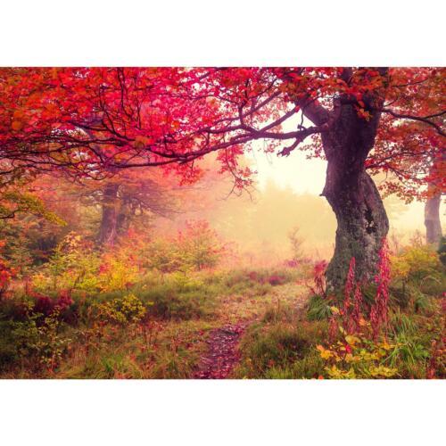 Fototapeten Tapete Fototapete Vlies Herbst Wald Wandbild XXL 3D Optik Wohnzimmer