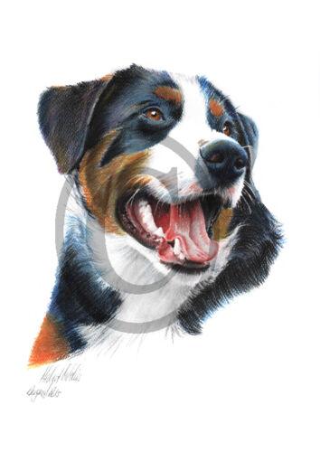 Hunde Tiere Appenzeller 001 Zeichnung Kunstdruck Haustiere
