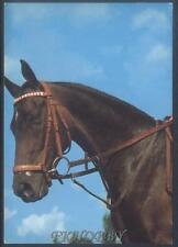 AK Postcard Celofan Kozienice Stud Horse Pferd Cheval Cavallo Caballo Paard z214