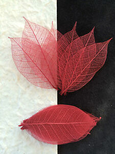 25-Skeleton-Leaves-Cranberry-Red-small-Rubber-Tree-leaf-Crafts-candlemaking