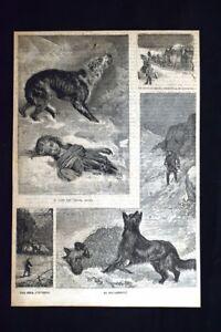 Il-cane-che-chiama-aiuto-Un-viaggio-della-diligenza-Incisione-del-1886