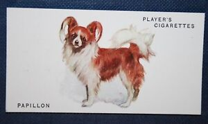PAPILLON  BUTTERFLY DOG  Early 1930039s Original Vintage Illustrated Card - Melbourne, Derbyshire, United Kingdom - PAPILLON  BUTTERFLY DOG  Early 1930039s Original Vintage Illustrated Card - Melbourne, Derbyshire, United Kingdom