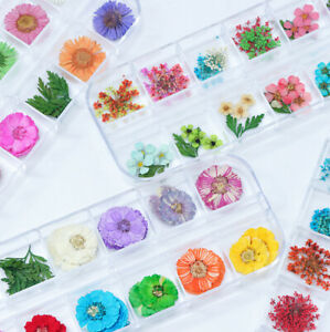 12-Color-Real-Dry-Dried-Flower-Leaves-3D-UV-Gel-Acrylic-DIY-Tips-Nail-Art-Decor