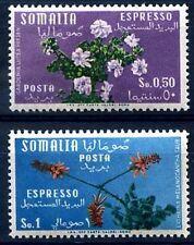 SOMALIA AFIS 1955 - FIORI ESPRESSI Nuovi **