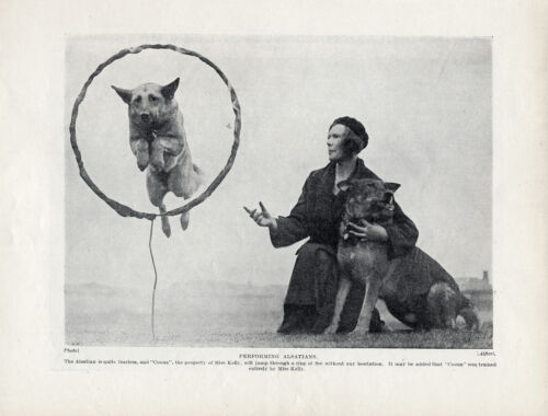 GERMAN SHEPHERD AGILITY TRAINING JUMPING THROUGH HOOP ORIGINAL 1934 DOG PRINT