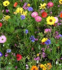 2000 Graines Mélange de Fleurs Assorties Idéal pour Abeilles Insectes