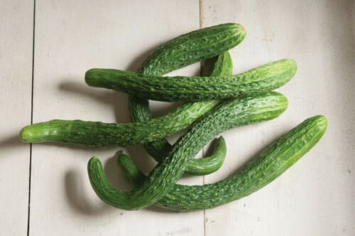 "/""USA/"" Organic Suyo Long F1 Cucumber 25-200 seeds"