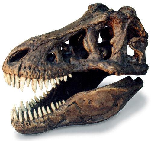 Tyrannosaurus rex dinosaurier - t - rex fossilen schädel replika mit stehen 13  x 8 x 11.
