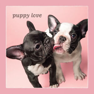 Details about Dog Studio Greeting Card - PUPPY LOVE (French Bulldogs) -  DS-C-LV-2284-143