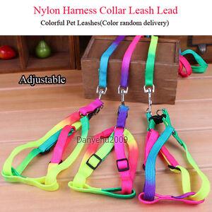 Rainbow-Color-Nylon-Harnais-Collier-Laisse-plomb-reglable-pour-Pet-Chien-Chat-Chiot