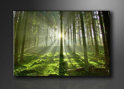 Symbol Der Marke Bild - Marken Bilder Aufhängfertig Bäume 120cm Xxl 3 5130>