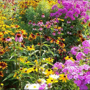 400wildflower Seeds Hardy Heat And Shade Tolerant