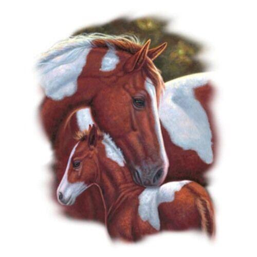 Color of Love Horse Hoodie Honey Sweatshirt S-XL,